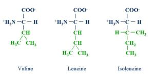 amino-molecular-structure